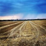 Honeychop oat straw harvest field
