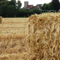 Oat Straw Suffolk