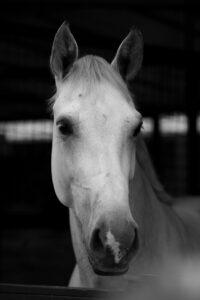 Laura Hamilton's horse aries