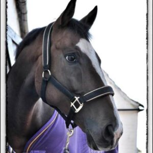 kay plummer's ex race horse