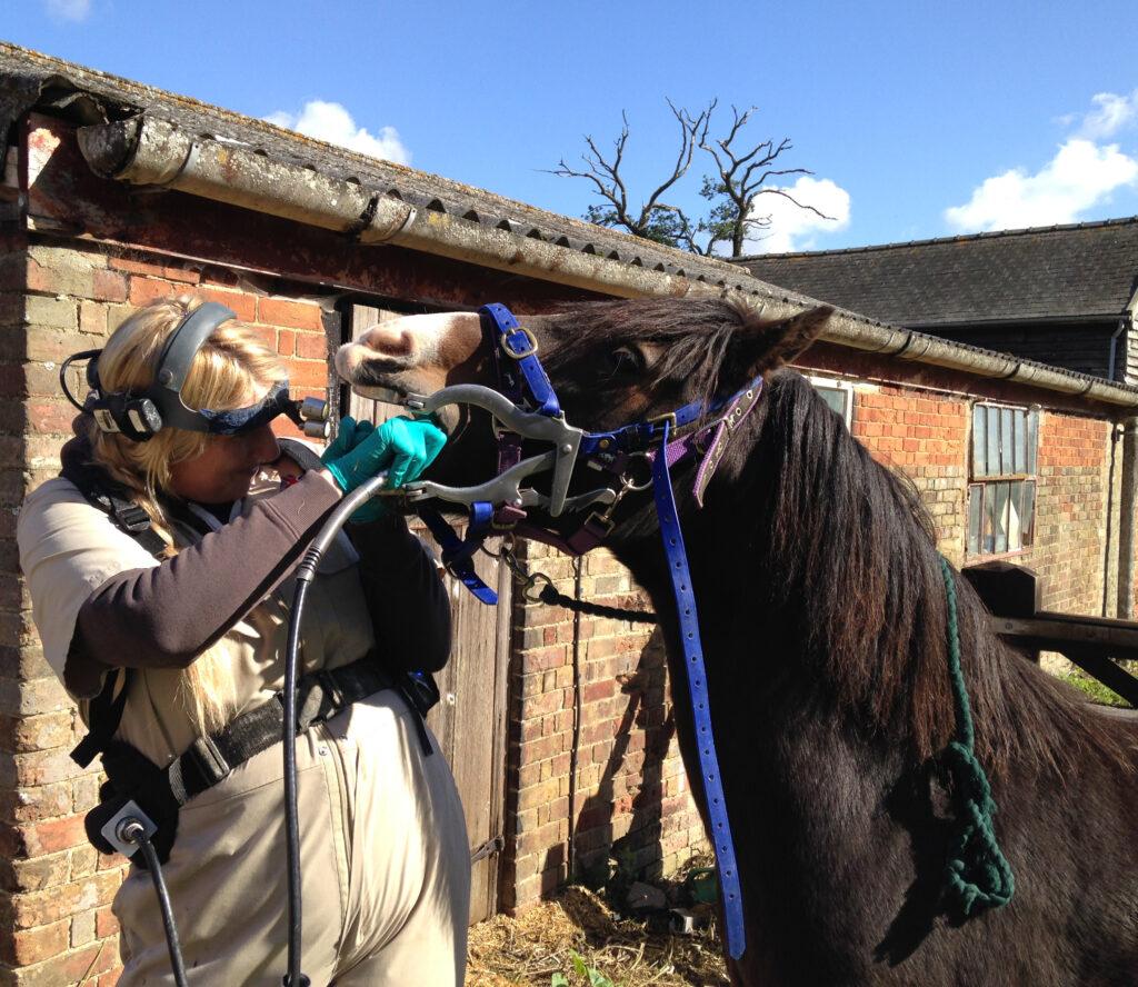 Dentistry on an elderly pony