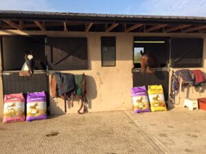 dressage camp at Twin Oaks, happy horses with their Honeychop
