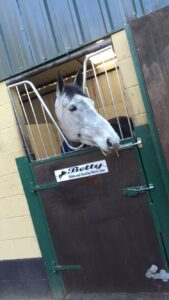 Betty with her head over the stable door