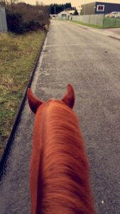 chester back in work