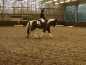 Dai pie dressage tvrc help for heros show
