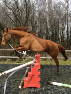 Chester jumping