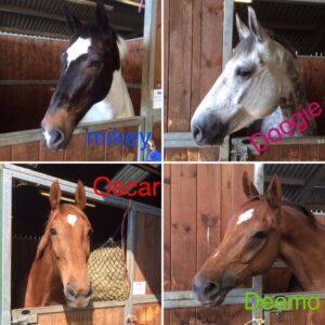 The horses settling in at camp