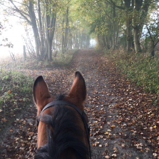 Autumn Horse Walk